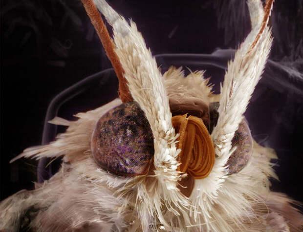 Удивительные портреты знакомых вам насекомых