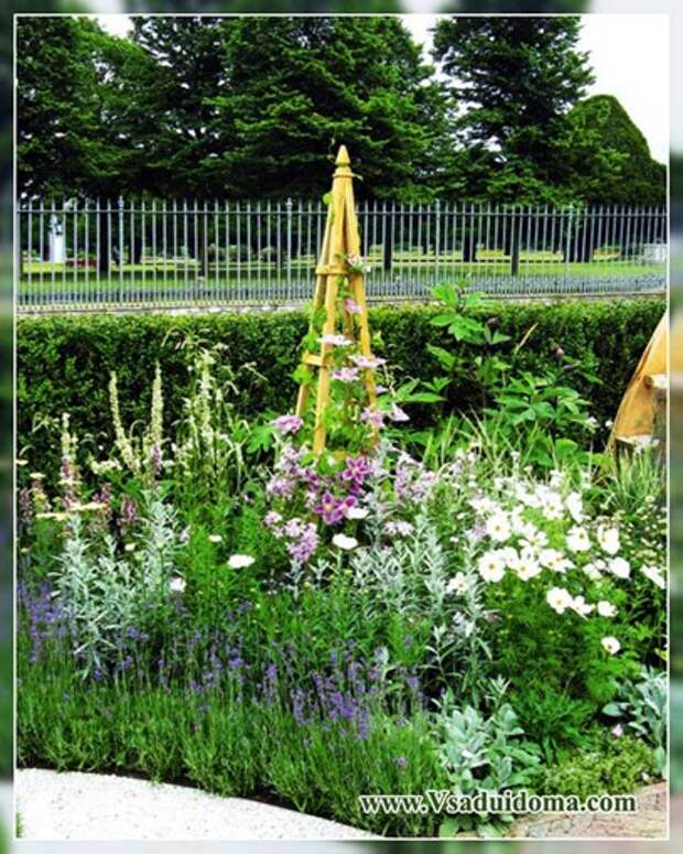 Лаванда в саду: с какими цветками и какую садить в цветнике