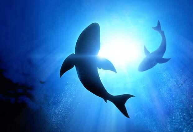 9 ситуаций, когда от акул человеку только польза