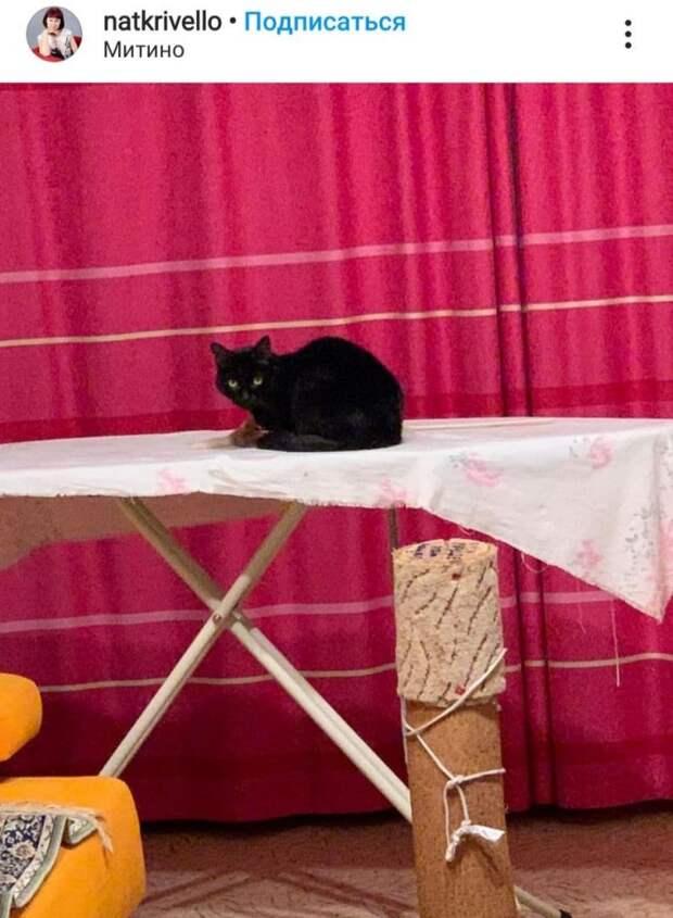 Фото дня: погладьте кота