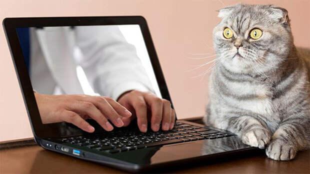Мужчина сквозь экран проник к клавиатуре ноутбука и печатает, пока ошарашенный кот смотрит вдаль.