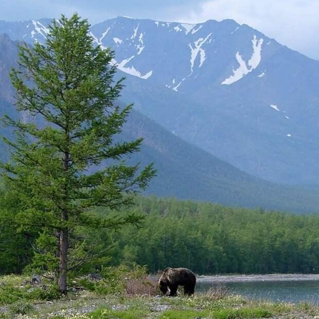 Жители Лианозовa отправились в онлайн-путешествие по заповеднику Байкала