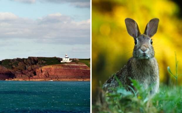На одиноком острове нашли древние артефакты. Первыми их обнаружили кролики