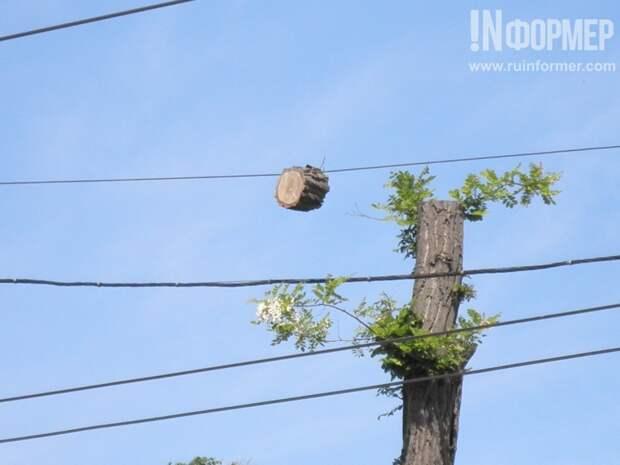 В Севастополе на проводах растут пни и грозят зашибить прохожих (фотофакт)