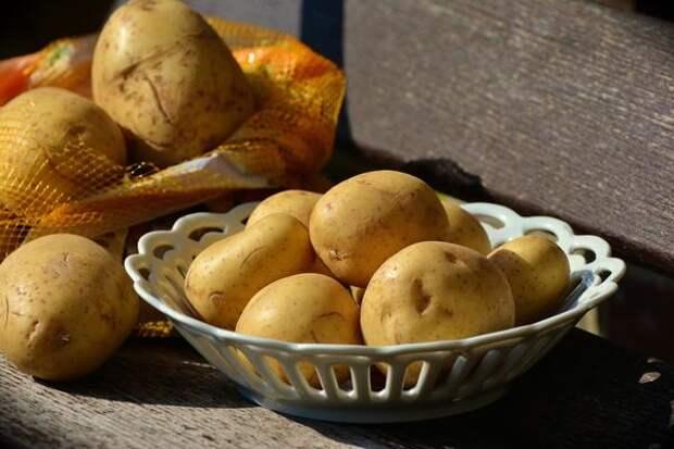 Можно ли вырастить два урожая картофеля за сезон?