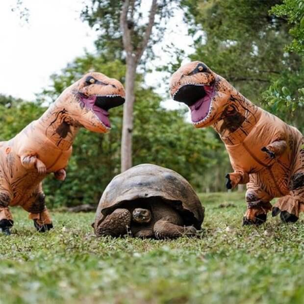 Все мечтают обэтом костюме тиранозавра, ивот почему