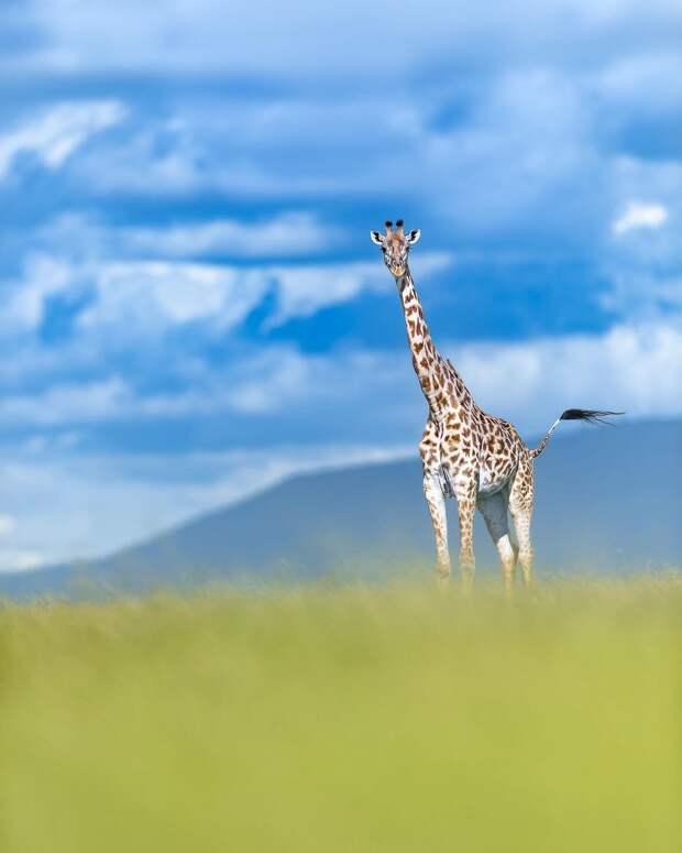 Томас Виджаян. Фотограф дикой природы
