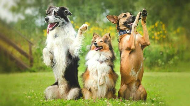 Дрессировка собак с использованием наказаний ухудшает их благополучие и вызывает стресс