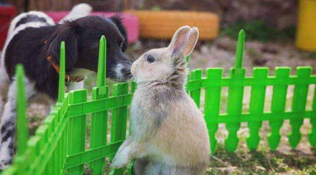 Домашние животные, которые почти никогда не будут жить месте. Лучше их заводить по отдельности