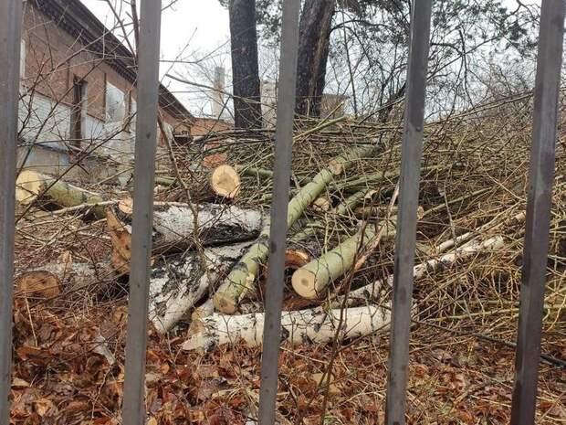 По «Традиции»: вырубку деревьев возле горбольницы Читы согласовала иркутская компания