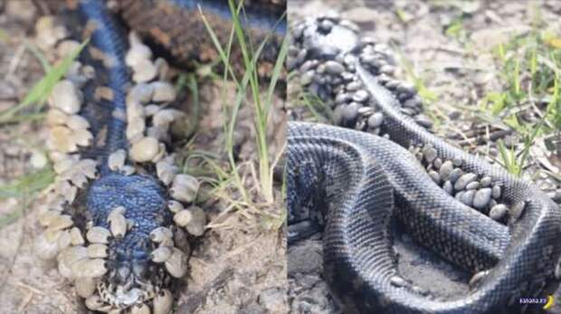 Природный ужас: клещи и змеи