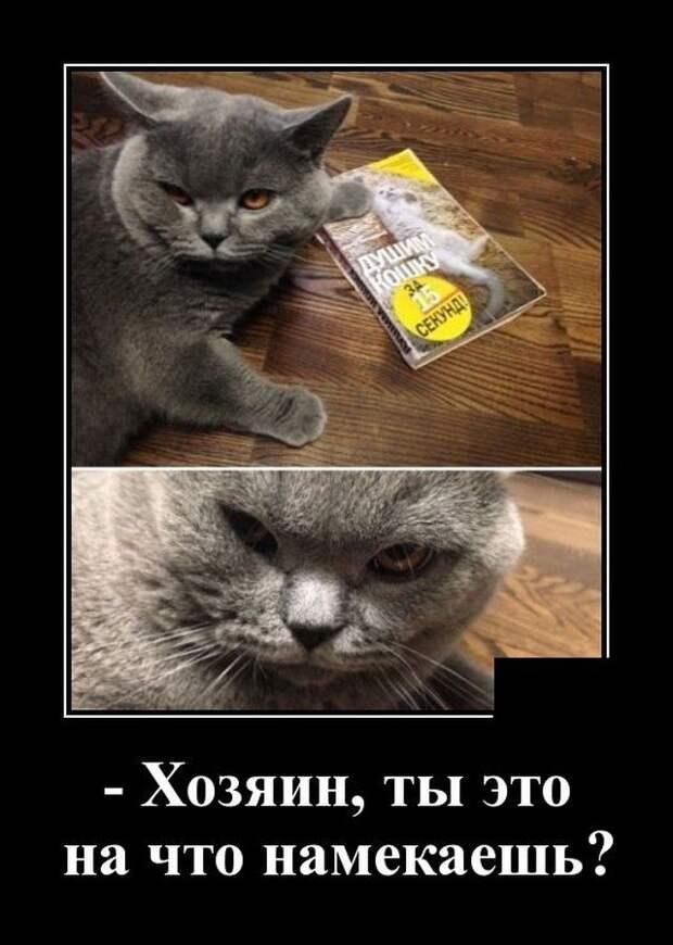 Демотиватор про хозяина кота
