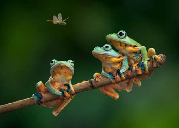 Три лягушки. Притча о реальном действии
