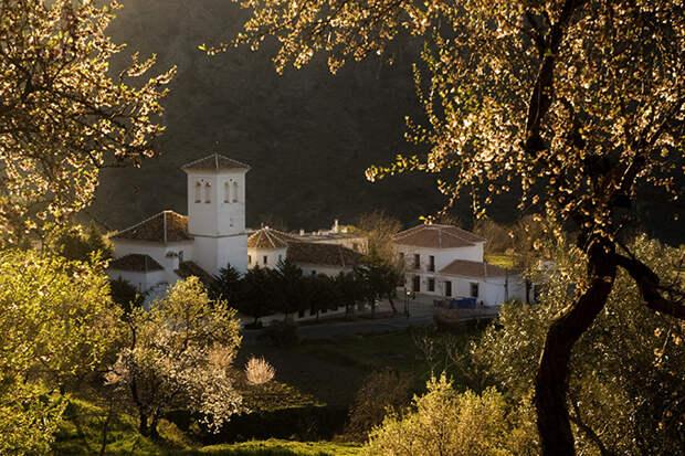 Цветение миндаля в деревне региона Альпухарра, Испания