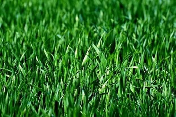 «Зеленый лабиринт» в парке «Вагоноремонт» приведут в порядок