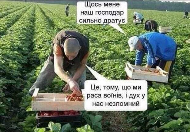 Без детей — это «старость, не радость» по-украински