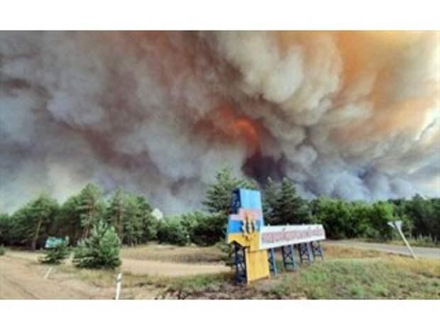 Кто пытается скрыть хищения леса на Донбассе, или Пожар Минских соглашений