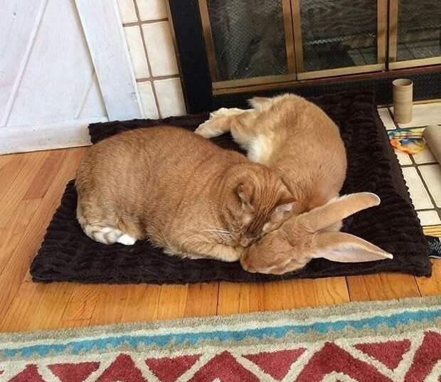 И всё-таки они подружились: 40 примеров дружбы зверей дружба, животные, коты, кролик, попугай, собака, черепаха