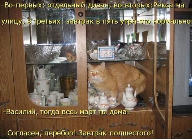 1450431459_kotomatrica-21