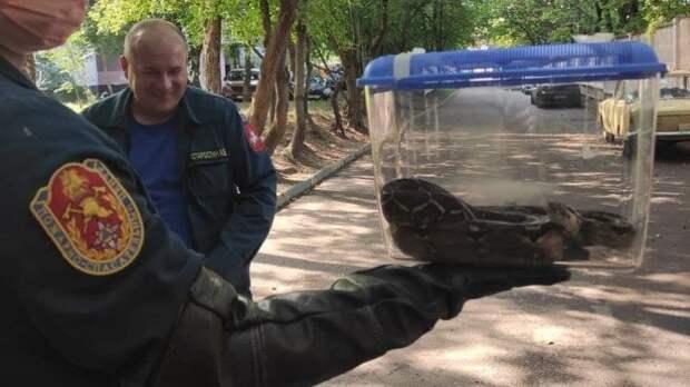 Королевского питона поймали под балконом дома на улице Рогова