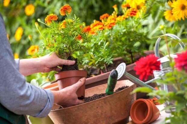 8 полезных товаров для цветоводов с Aliexpress