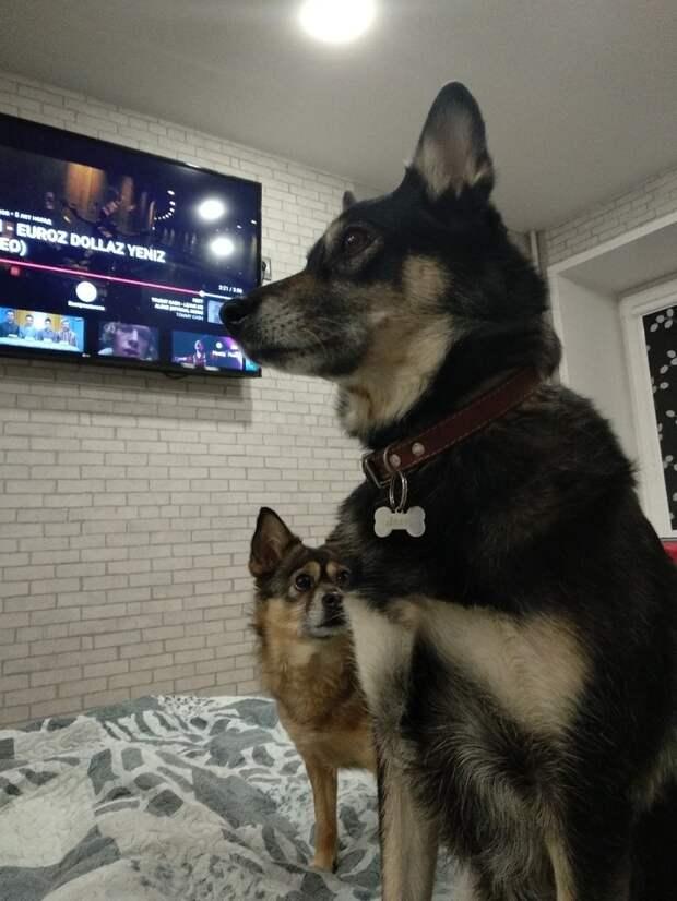 Гуляя с собакой, мужчина встретил щенка без хвоста, который пережил немало невзгод