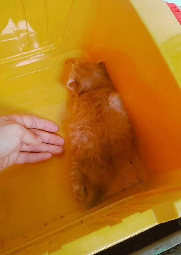 Умоляем о помощи!!! Начальство грозится избавить от животных, прежде всего - утопить котëночка!!!