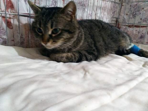 В Крыму спасли умирающую в подвале кошку, которой пришлось пересаживать кожу