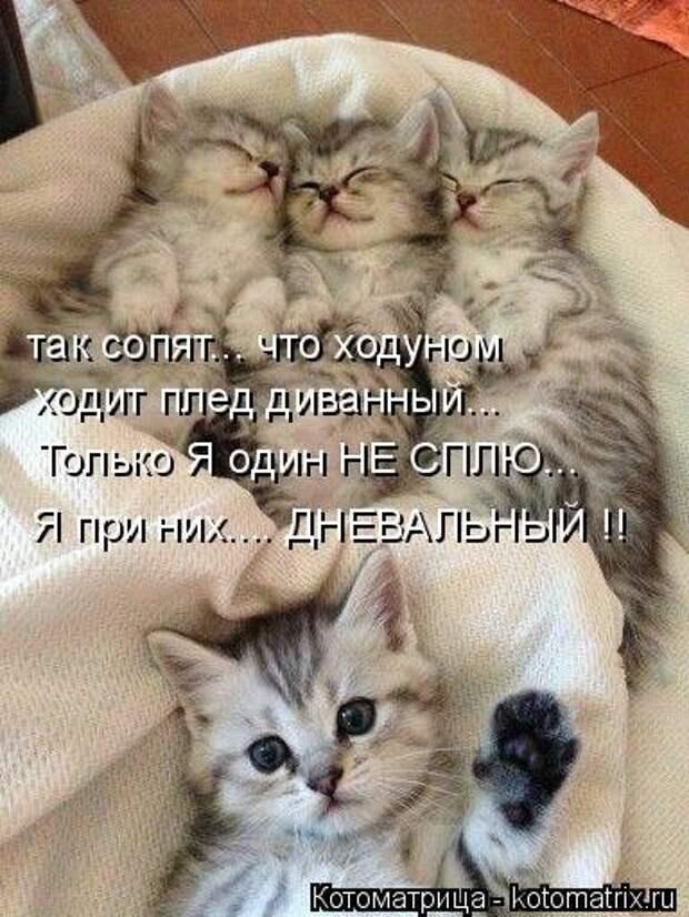 Новые котоматрицы для настроения (32 шт)
