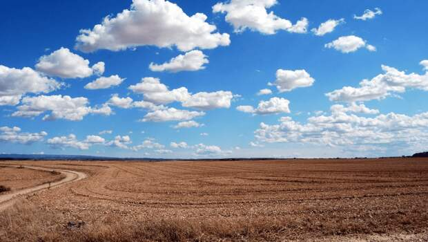 98% находящихся в обороте сельхозземель Казахстана оказались в аренде