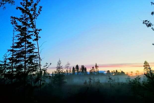 Рассвет в тайге, заболоченный участок скрыт туманом, фото https://pixabay.com/ru/