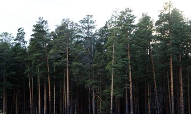 Экс-начальник Усть-Удинского лесного хозяйства отправится в колонию на 4,5 года за вырубку леса на 13 млн рублей