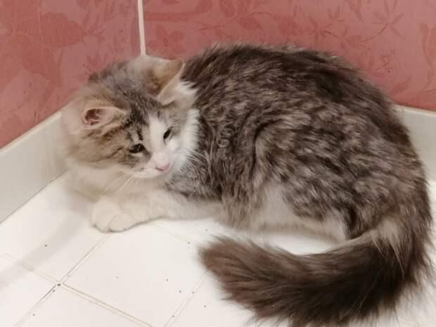 Внутри кота любовь и теплота!!!