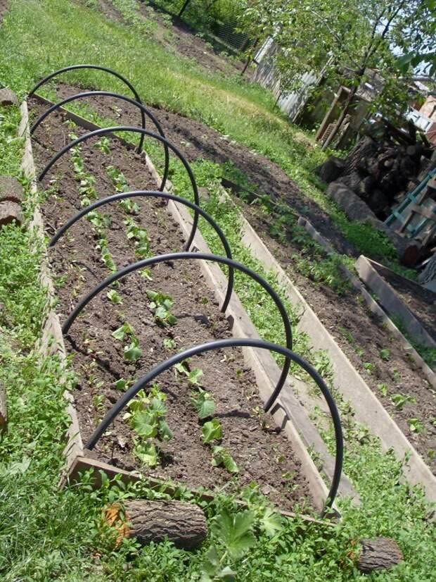 Огурцы в траншеях — двойной урожай!