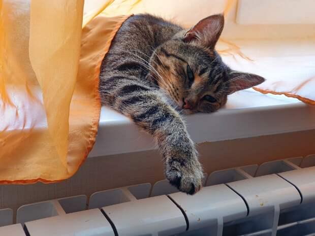 Если вы готовы помочь домашнему котишке, попавшему в беду, звоните!