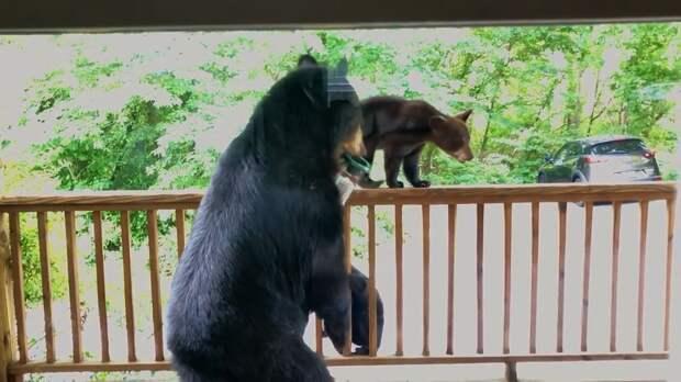 Супруги из США подманивали птиц, но к ним пришли медведи