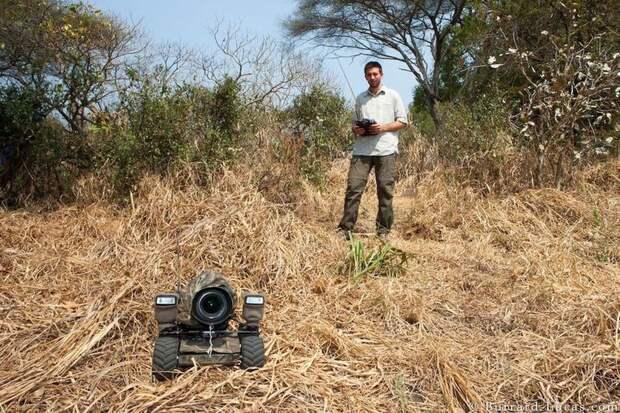 Потрясающая африканская дикая природа крупным планом: 15 захватывающих фото