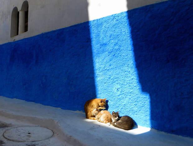 На теплом марокканском солнышке животные, котики, лучи, погреться, солнечные ванны, солнце, температура, тепло