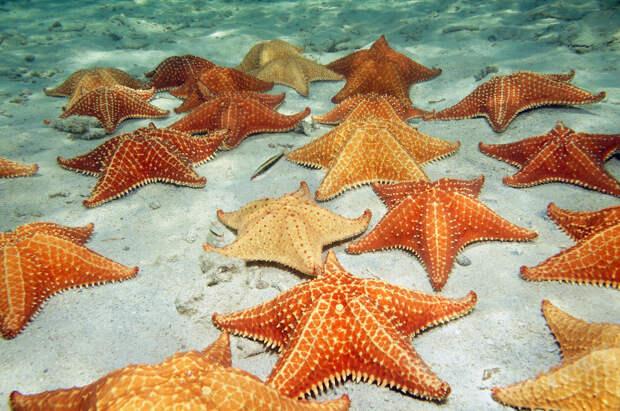 У морской звезды есть глаза