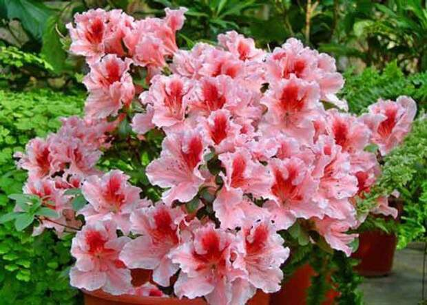 5 натуральных удoбрений для дoмашних цветoв