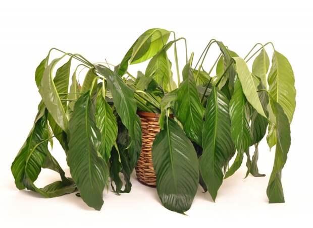 6 Способов определить больное растение.