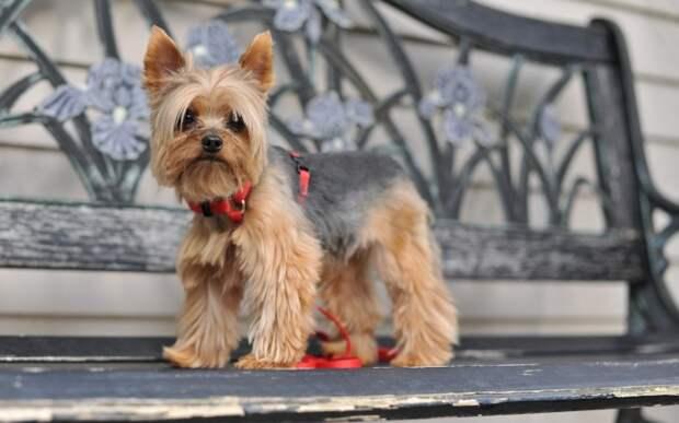 Кинологи назвали самые популярные у москвичей породы собак