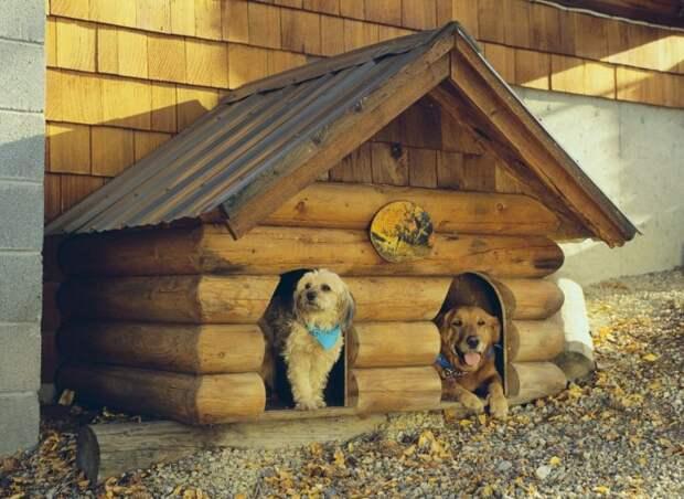 Почему в прошлом веке строили срубы даже для собак