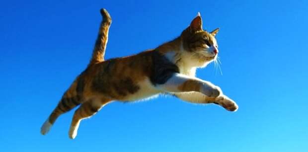 Кошка летела вниз. Теперь, от нее самой, ничего уже не зависело