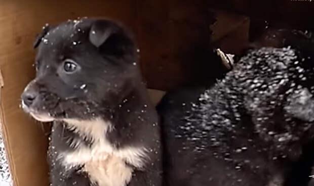 Полицейские в Хакасии спасли щенков, брошенных в мешке на железнодорожных путях