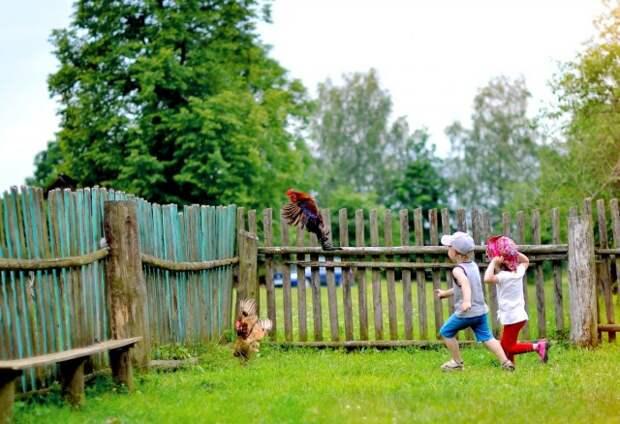 Как же хорошо бывает летом в деревне - наслаждаемся хорошим настроением