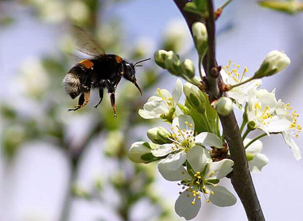 Народные приметы про весну