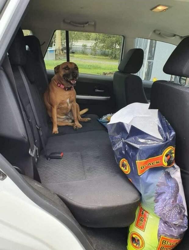 собака в машине