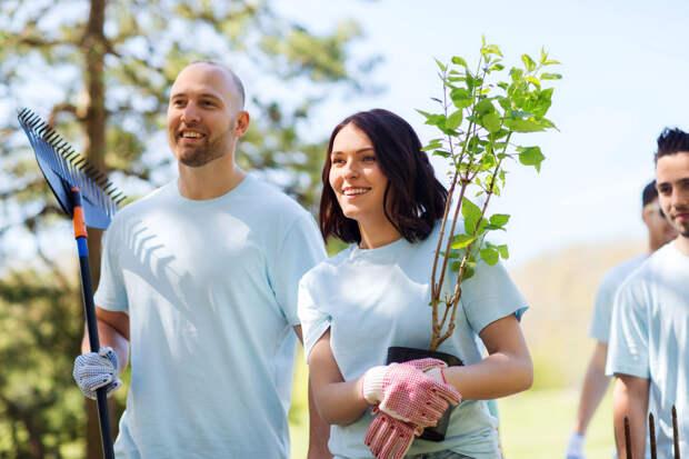 Пара сажает дерево