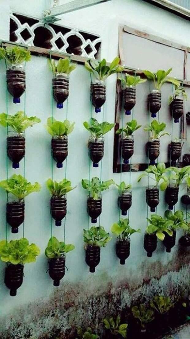 Пластиковые бутылки вам помогут украсить забор и вырастить зелень.